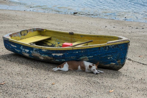 One of the many dogs in Viani Bay, finding some cool shade.