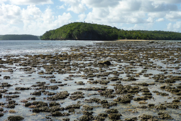Coral Gardens at low tide