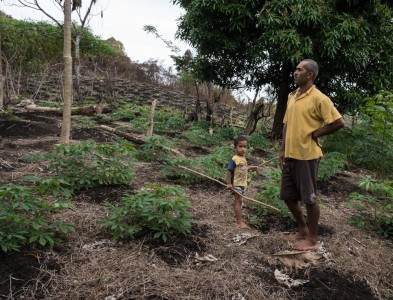 Surveying the cassava and taro crops