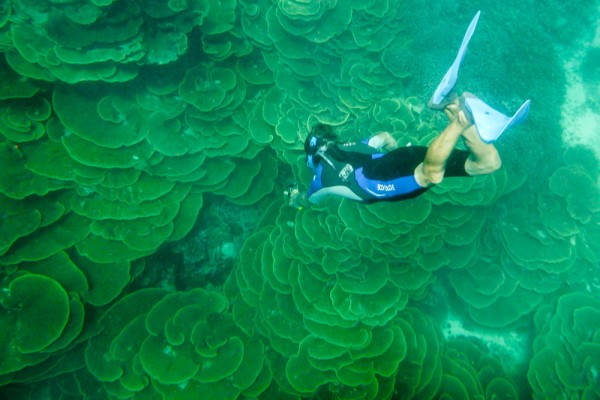Monty freediving in the Cabbage Patch