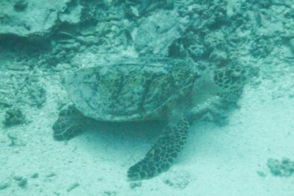 Turtle sitting on the bottom