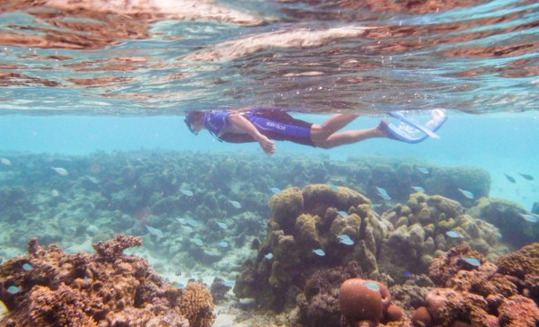 Snorkeling in the shallows
