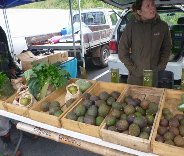 Wide selection of avocados.