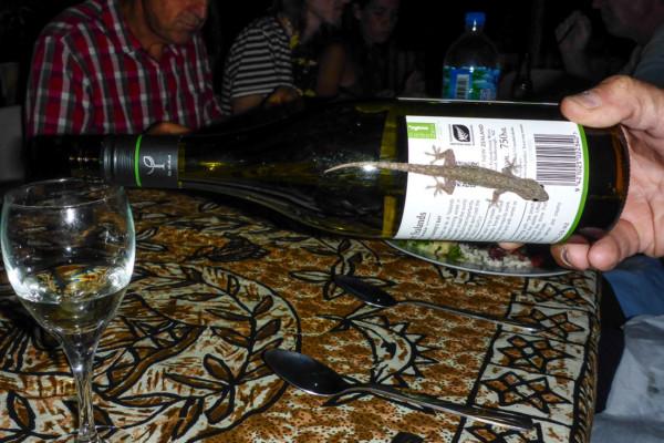 Gekko wine!
