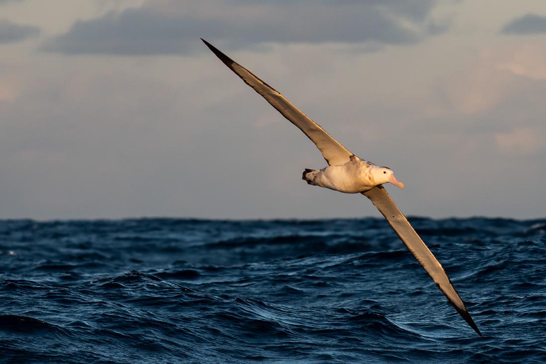 Birds on Passage